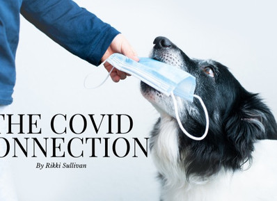 What is COVID doing to our dogs?