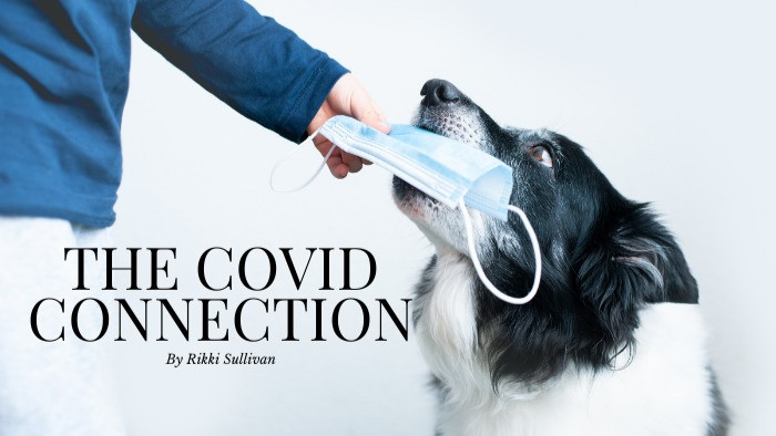 COVID AND DOGS, HOW COVID AFFECTS DOGS