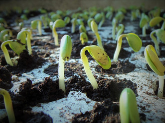 Grassroots entrepreneurship – what does it require?