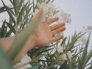 A mão e a flor