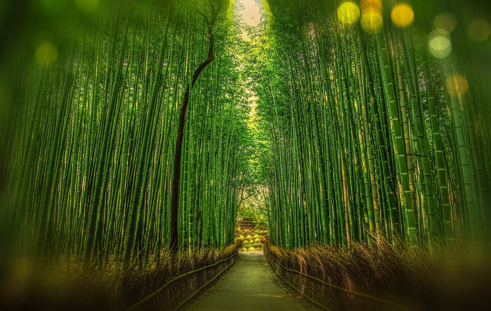 Bamboo forest - bamboo