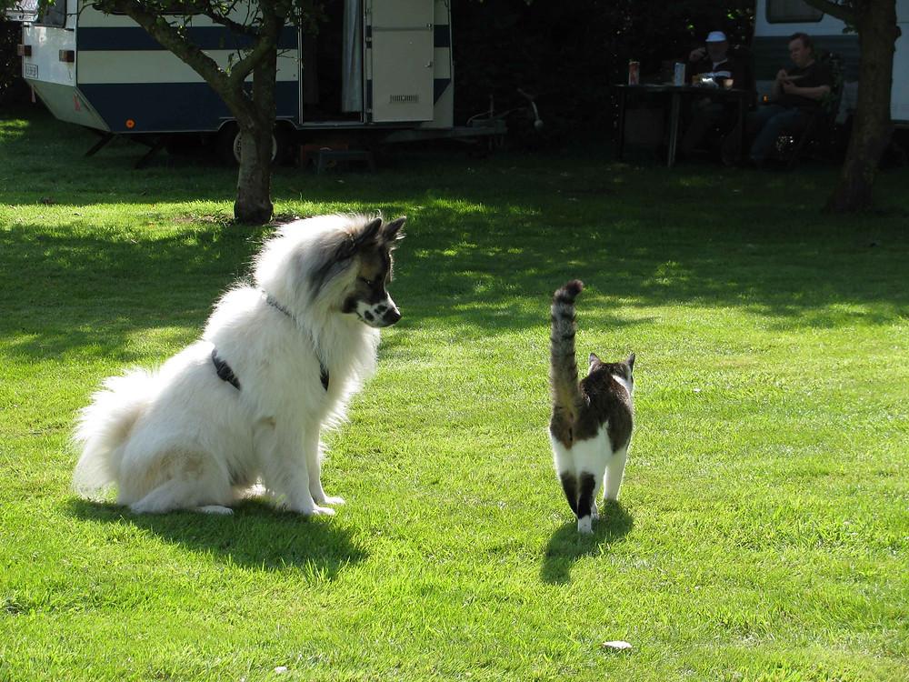 Ares mit Katze
