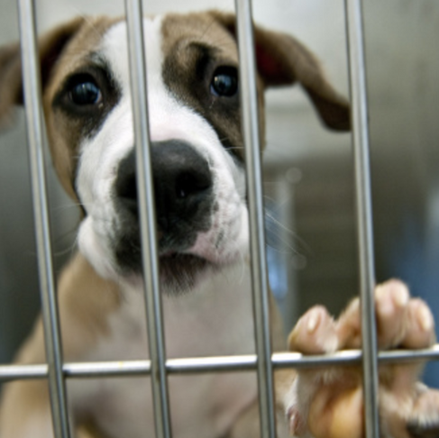 Encourage the City of Chicago to Adopt The No Kill Policy Recommendations