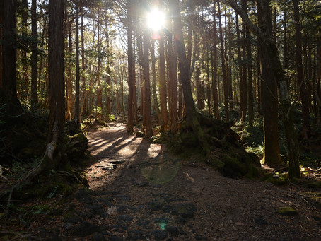 Sea of Trees Tour in Aokigahara Forest New Year`s 2018.