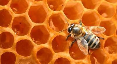 Les vertus des différents miel ainsi que quelques masques de beauté