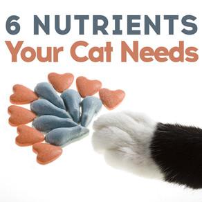 6 Nutrients Your Cat Needs