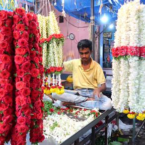 India - Blomster og historie i Mysore