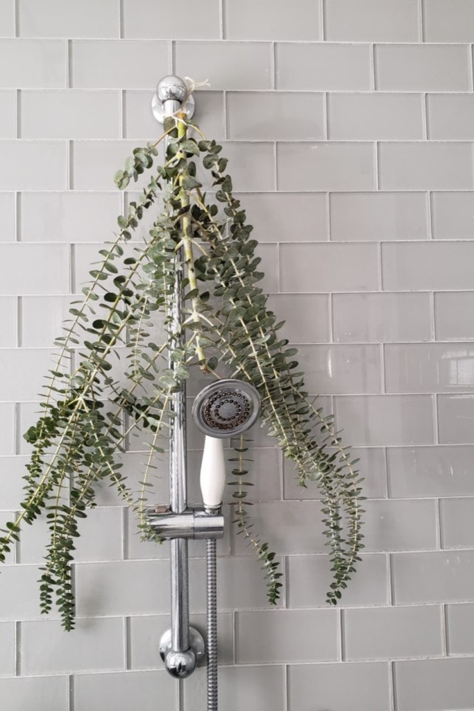 Eucalyptus in the shower directions