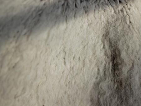 Woollen Rovings