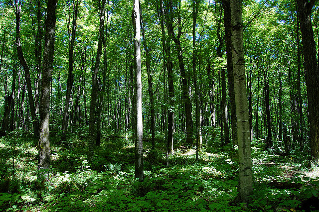 image of forestry in Michigan
