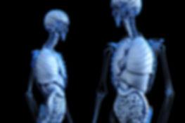 anatomical-2261006_1280.jpg