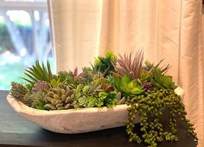 Successful Succulents!