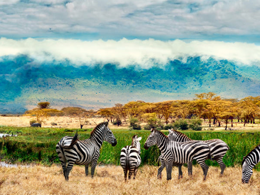 Wild Gorillas, Gorgeous Mountain Terrain and Rich Culture with Travel Wild