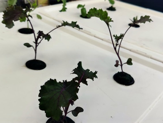 How to build your own hydroponic system: a beginners guide