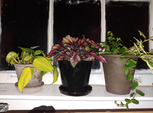 Indoor Gardening for the Novice : Repotting 101