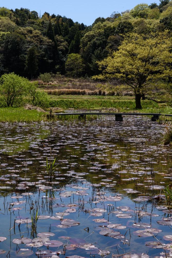 里山ビオトープ二俣瀬 / Biotope in Futamatase village