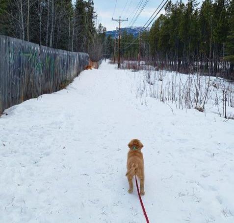 Puppy on a walk