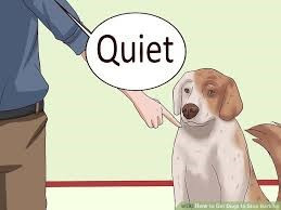Person teaching a dog to be quiet