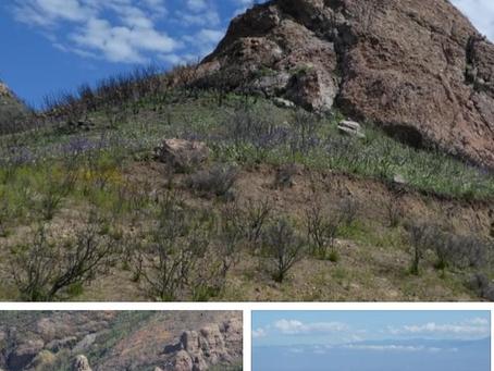 Coastal Mountains & Views of Malibu