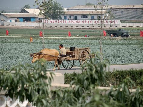 """Norte ou Sul: Que Coreia enfrenta uma """"crise alimentar""""?"""