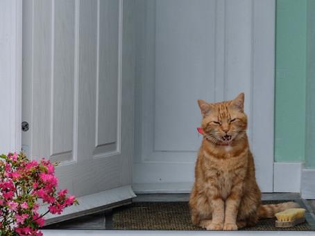 My doorstep challenge.