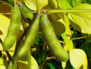 How To Get The Most Benefit From Soy Foods? How Much Should We Get?