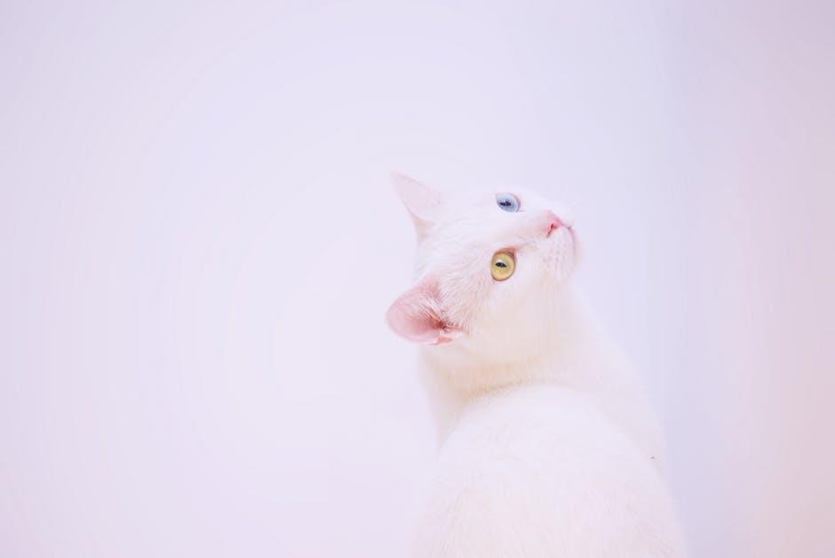 gato, ojos, color de ojos, test, personalidad, sé el jefe, hectorrc.com