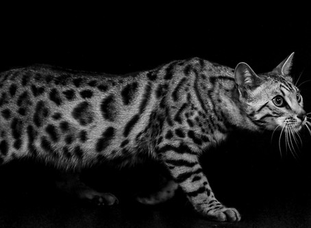 Stunning images get mono competitions underway