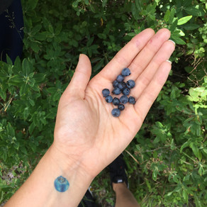 Meet the Ingredients: Blueberries