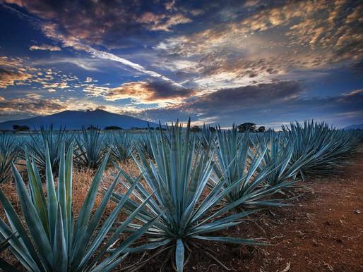 Tequila, Jalisco. La tierra del oro azul