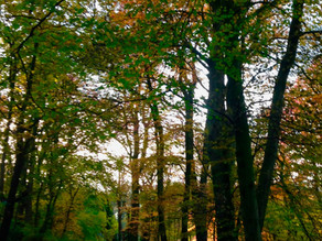 Mother Natures Autumn Colours