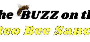 Galisteo Bee Sanctuary