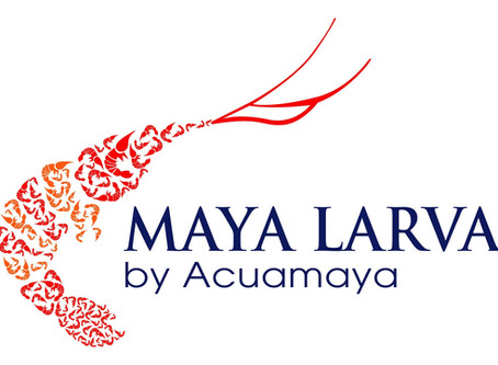 Maya Larva, the secret behind our great shrimp in Guatemala and other countries!