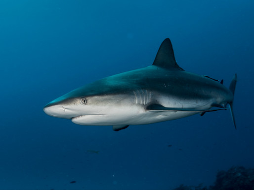 best Locations for shark photography in the bahamas