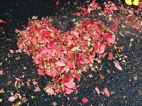 Surrender into autumn