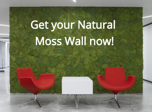 Why a Natural Moss Wall is the Best Buy