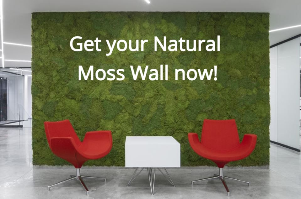 Natural Moss Wall
