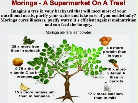 Goodness of Moringa