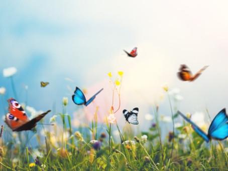Conto dos Sonhos: Como ver borboletas
