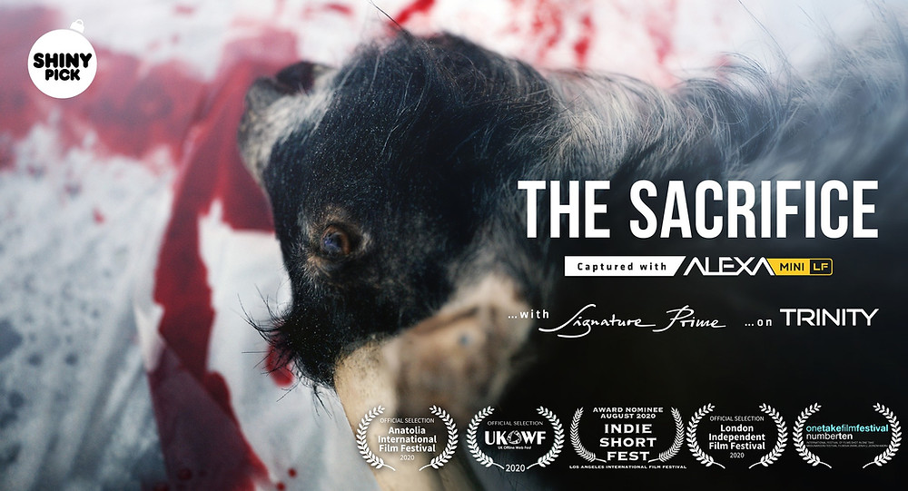 The Sacrifice movie poster. A slaughtered cow lies on a bloody white sheet.