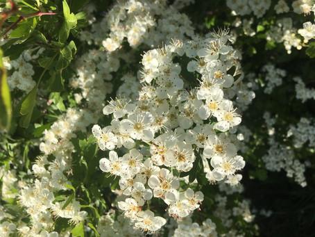 La thérapie florale : les bienfaits subtils des fleurs