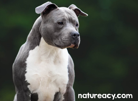 Large breed dogs need this ingredient to stay healthy