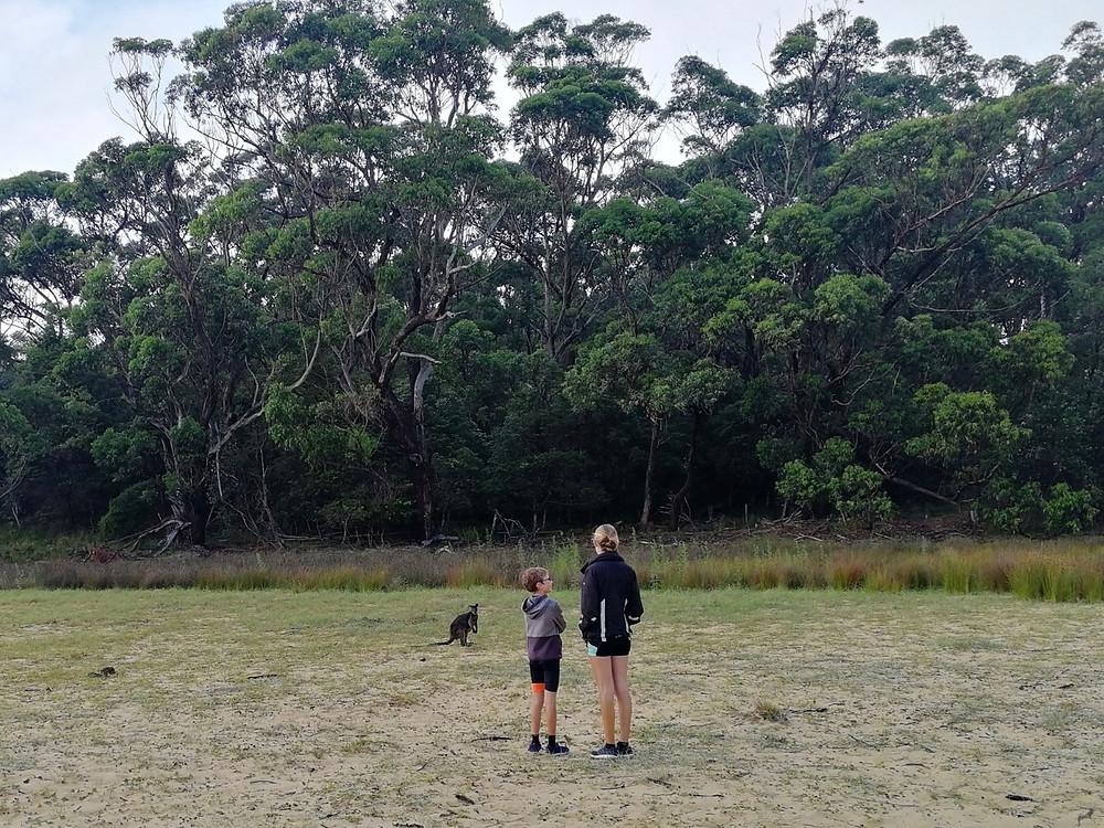 Tour du monde à vélo en famille kangourou bivouac Australie