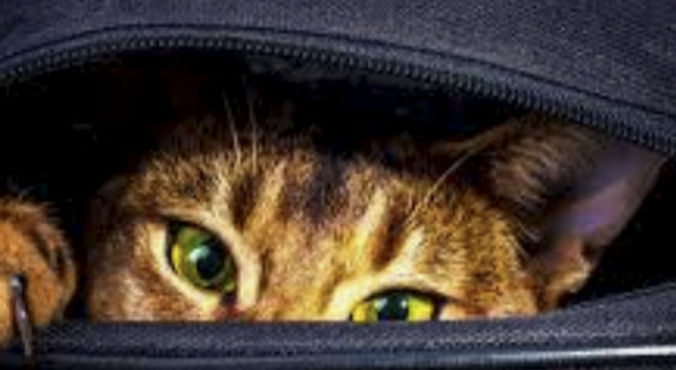 The Cat is Out of the Bag