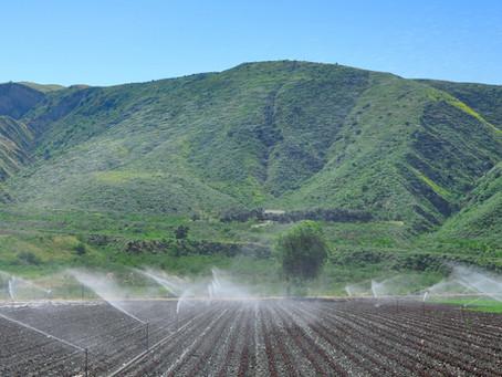 Орошение и системы полива, что это? Зачем они нужны ?  Преимущества и недостатки систем полива.