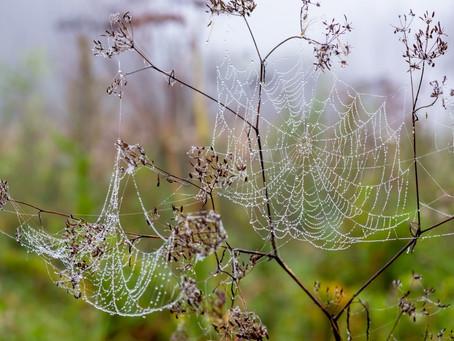 Утро и паутинки