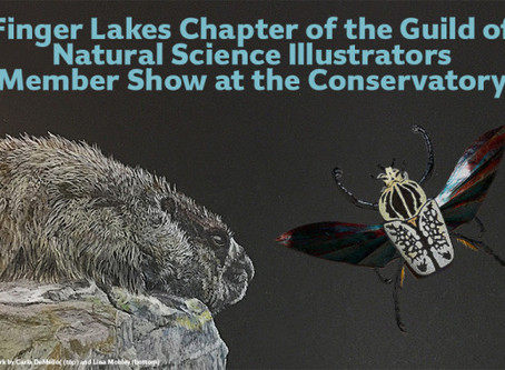 Finger Lakes Chapter of the Guild of Natural Science Illustrators