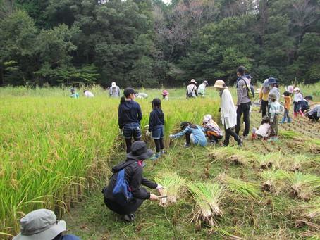 10月4日(日)「親子わくわく自然学習 稲刈り」 報告