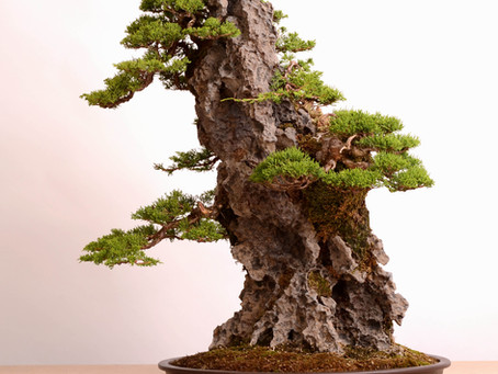 How to attach a tree to the rock?