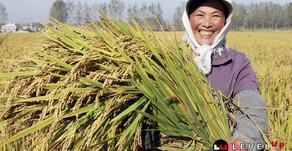 สถิติชี้ SME ทำให้คนจีนรวยขึ้น รัฐบาลสีจิ้นผิงสนับสนุนเต็มที่
